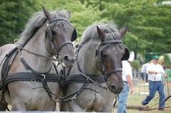 De paarden van het werk Royalty-vrije Stock Foto's