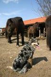 De paarden van Waching Royalty-vrije Stock Afbeeldingen