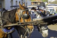 De paarden wachten op hun draai bij Prins Islands dichtbij Istanboel Stock Foto