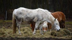 de paarden weiden stock footage