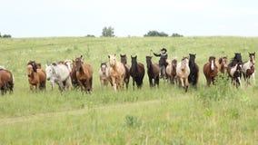 De paarden weiden in de weide stock footage