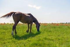 De paarden weiden in openlucht royalty-vrije stock afbeelding
