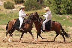 De paarden Zomer Fest van Las Golondrinas van de Demonstratie. stock fotografie