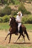 De paarden Zomer Fest van Las Golondrinas van de Demonstratie. stock foto