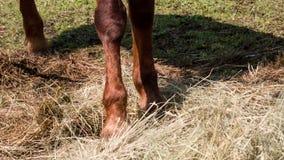 De paardhoef slaat stock video