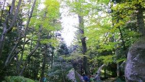 De paarklimmers die op de rotsen in het de bos oude klip en mos van het wildernislandschap beklimmen behandelden rotsen in dramat stock footage