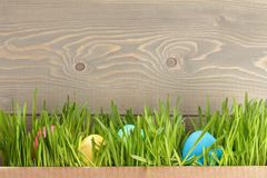 De paaseieren hiden in gras Stock Afbeelding