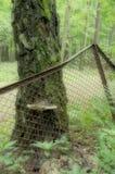 de paddestoel op de boom Stock Afbeeldingen