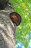 De paddestoel van de boom Stock Afbeeldingen