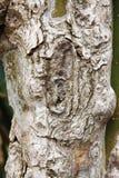 De paddestoel van de cactus Stock Fotografie