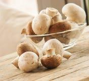 De paddestoel van de champignon Stock Fotografie