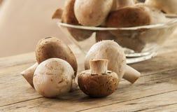 De paddestoel van de champignon Royalty-vrije Stock Fotografie