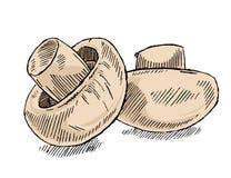De paddestoel van de champignon Stock Afbeeldingen