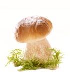 De paddestoel van het eekhoorntjesbrood in een bosscène en een witte achtergrond Stock Fotografie