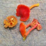 De paddestoel van Hygrocybeminiata Royalty-vrije Stock Afbeeldingen