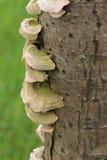 De paddestoelen groeien op de boomstam Stock Afbeeldingen