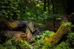 De paddestoelen groeien op een oude boomboomstam die in een bos ligt royalty-vrije stock foto