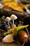 De paddestoelen van de herfst in het bos stock fotografie