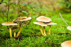 De paddestoelen van de herfst in het hout royalty-vrije stock fotografie