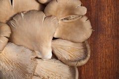 De Paddestoelen van de oester Royalty-vrije Stock Afbeelding