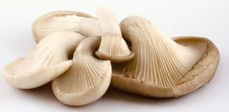 De Paddestoelen van de oester Stock Afbeeldingen
