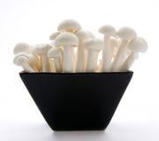 De Paddestoelen van Enoki van de oester Royalty-vrije Stock Afbeeldingen
