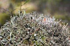 De paddestoelenparasieten groeien op een dode boom, close-up royalty-vrije stock foto's