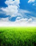 De padiegebied van de landbouw met blauwe hemel Stock Afbeelding