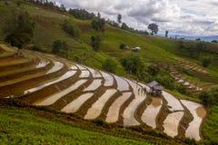 De padievelden op terrasvormig in Noord-Thailand, Mae-jam, Chiang M Royalty-vrije Stock Fotografie