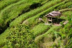 de padievelden van Bali Stock Fotografie