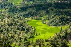 De padievelden van Nepal in de Vallei van Katmandu Stock Afbeelding