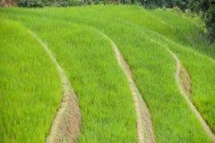 De padievelden van Sa-Pa in Vietnam Stock Foto's