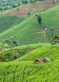 De padieveldenachtergrond van het plattelandshuisjeterras Royalty-vrije Stock Afbeelding