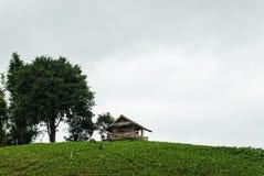 De padieveldenachtergrond van het plattelandshuisjeterras Royalty-vrije Stock Fotografie