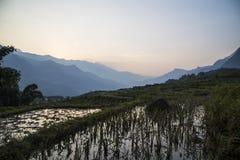 De padieveldenlandschap van Vietnam Stock Foto