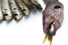 De paling en de vissen van Moray Royalty-vrije Stock Afbeelding