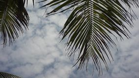 De palm blaast bomen stock video