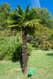De palm, door M. wordt geplant die Radames Costa in park-arbo Royalty-vrije Stock Afbeelding