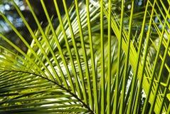 De palm doorbladert achtergrond Royalty-vrije Stock Afbeelding