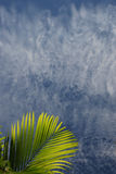 De palm doorbladert in Blauwe hemel-kaaiman Stock Afbeeldingen