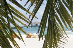 De palm doorbladert op het strand Stock Afbeelding