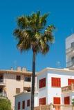 De palm en de woonhuizen die voor siësta wordt gesloten Royalty-vrije Stock Foto's