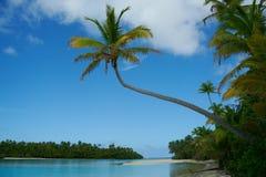 De palm leunt uit over waterenrand Royalty-vrije Stock Foto's