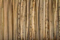 De palm met stro bedekt Daktextuur voor Achtergrond Royalty-vrije Stock Afbeeldingen