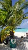 De palm op het strand Stock Foto