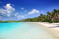 De palm treesl Caraïbisch strand Mexico van het Eiland van Contoy Stock Foto