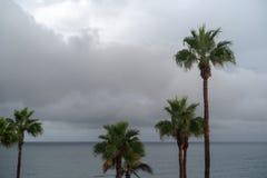 De Palm van de Canarische Eilandendatum stock fotografie