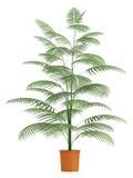De palm van Chamaedorea in container Royalty-vrije Stock Foto