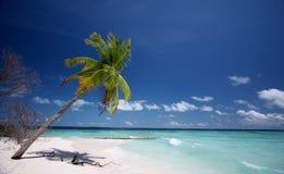 De Palm van Coco stock afbeelding