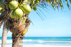 Kokospalm met hemel en oceaanachtergrond. Royalty-vrije Stock Foto's
